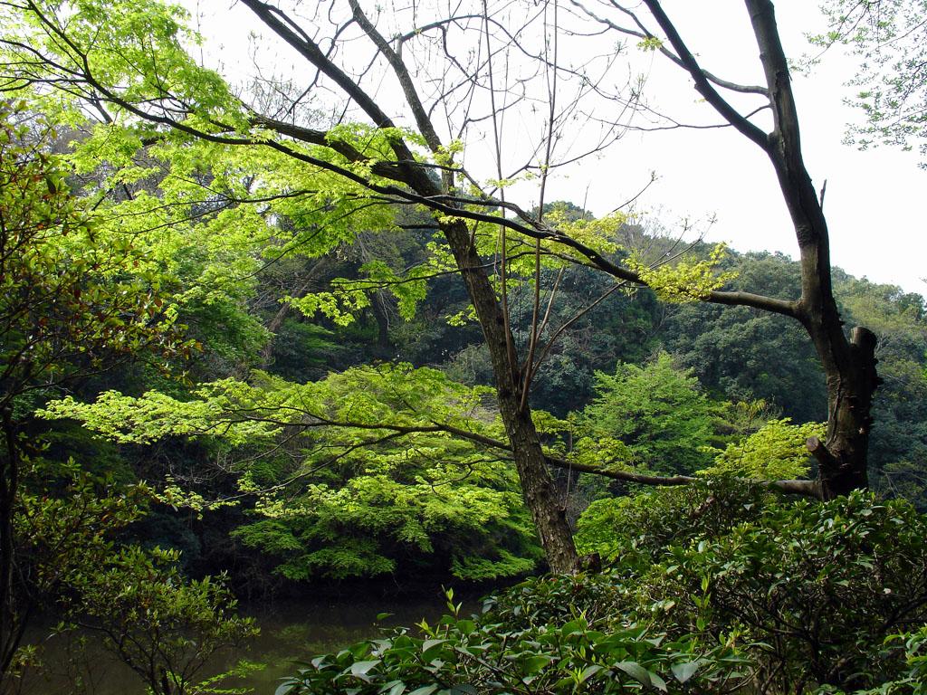 jardin_tokyo.JPG