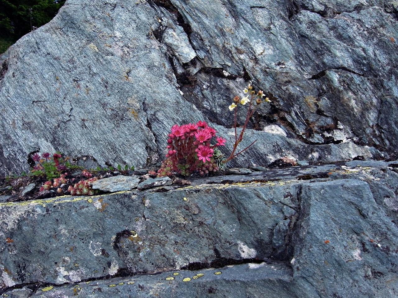 pierre-fleurs