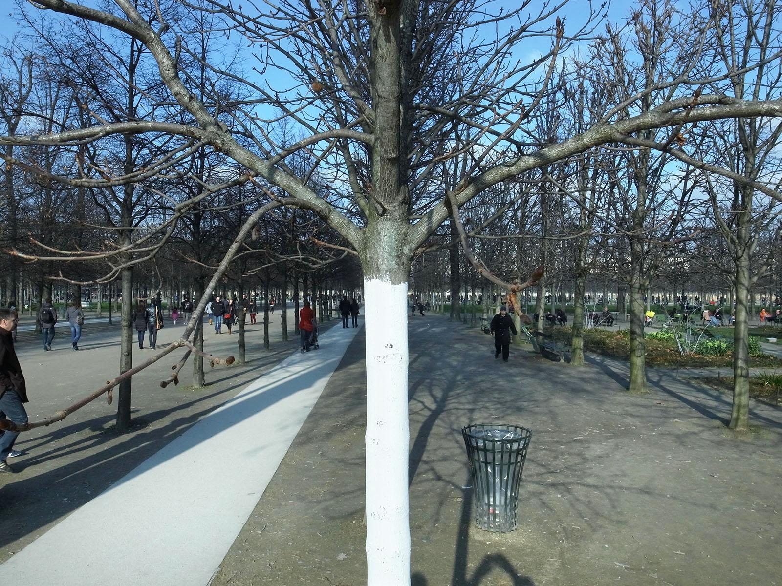 tronc-blanc-tuileries