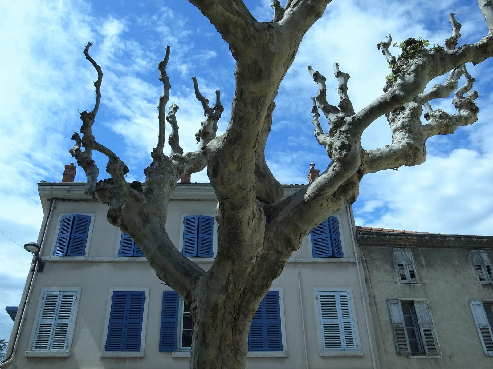 loriol-platane-maison