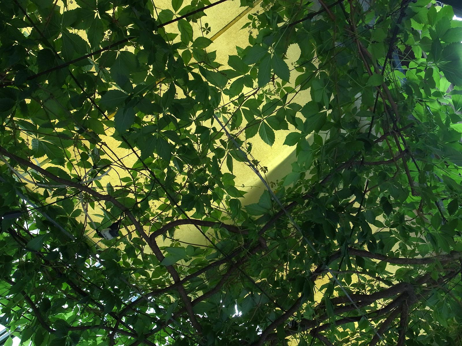 giardinetto-venise