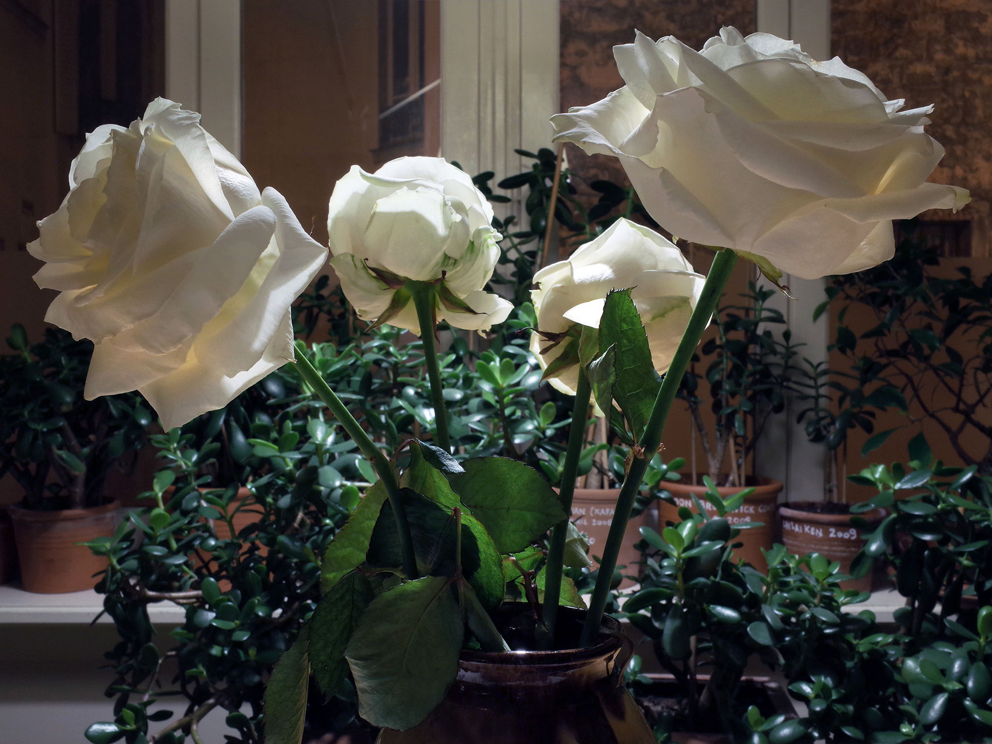 4 roses blanches