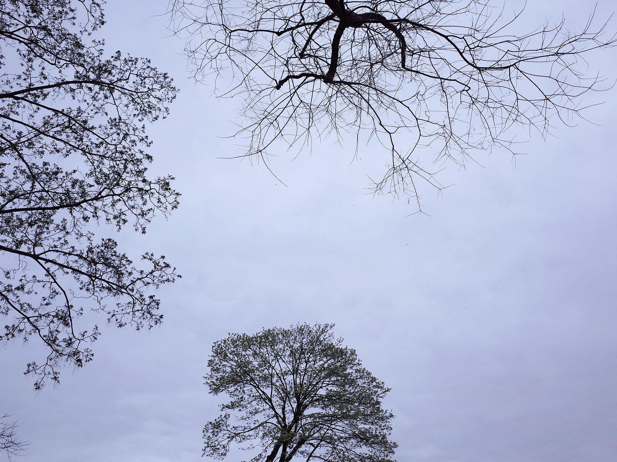 arbre aux feuilles 2014