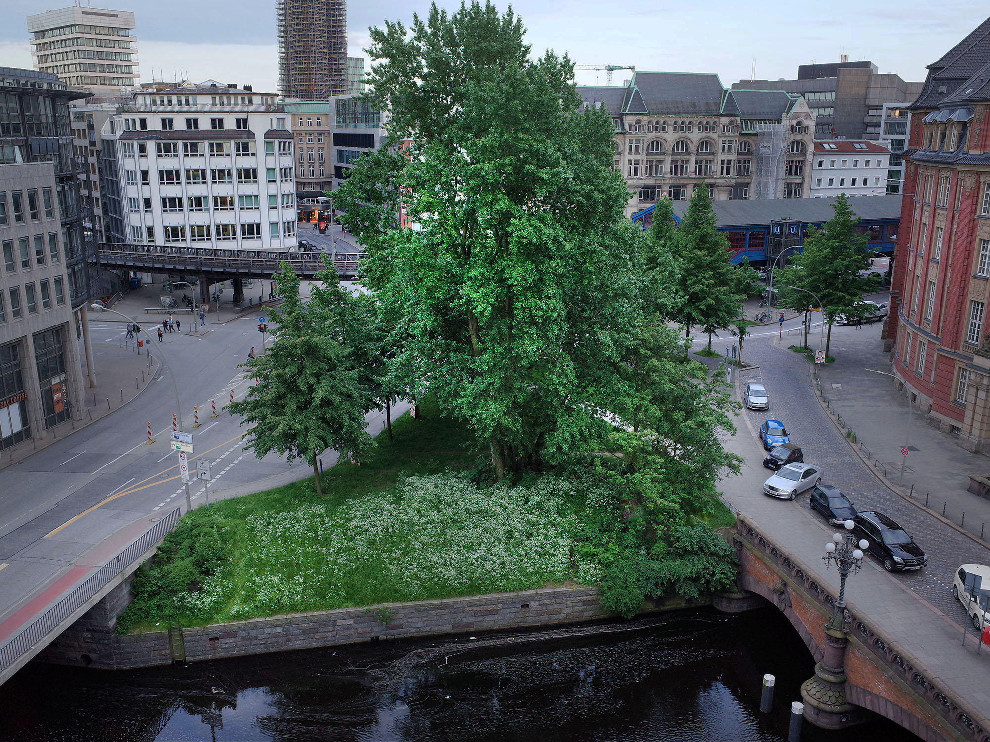 arbre-nicolas