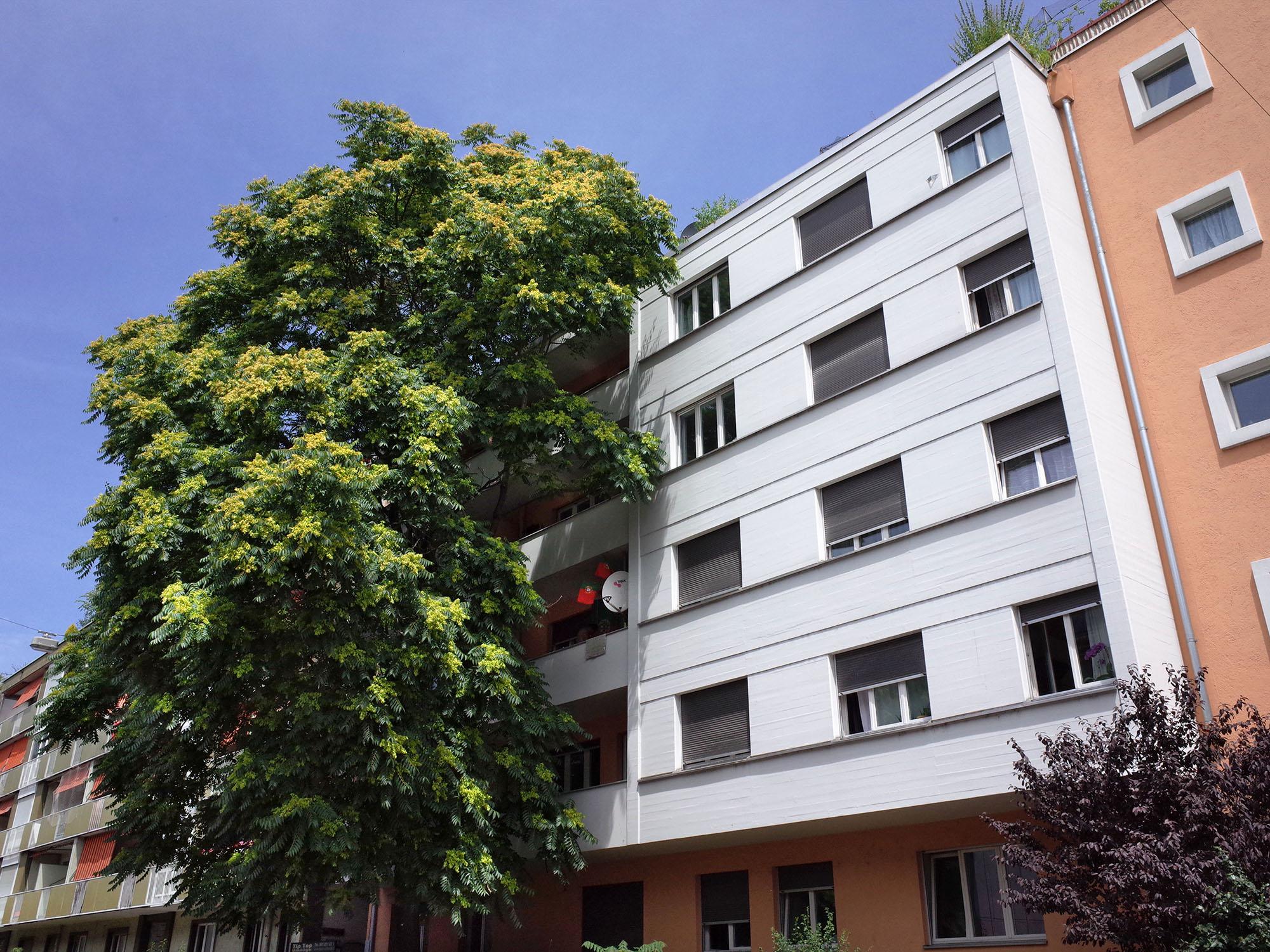arbre-immeuble-bale