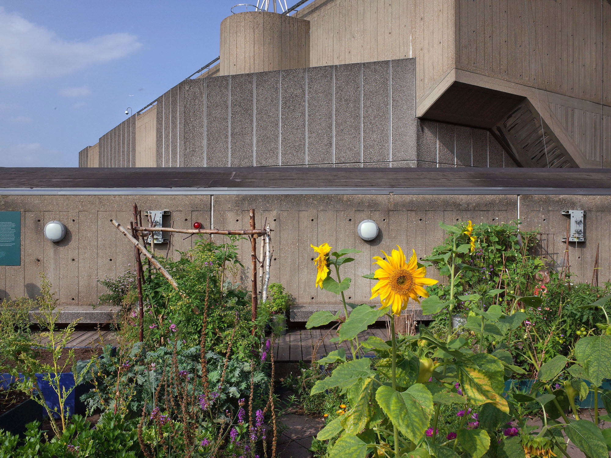 hayward gallery sunflower