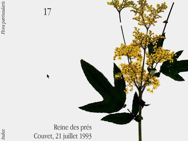 herbier-flora-petrinsularis