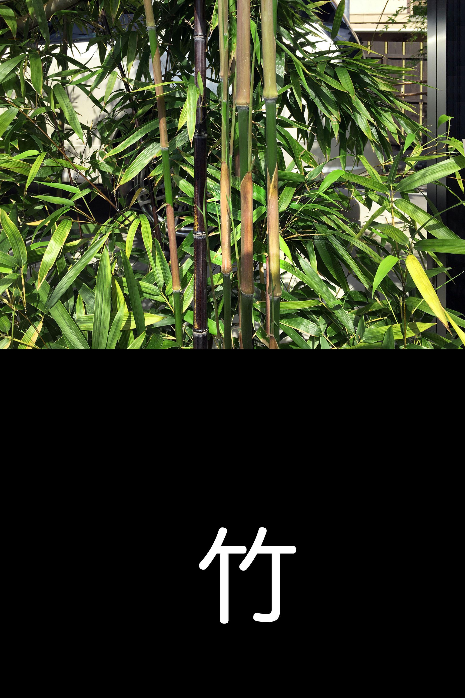 bambou-ubiquiste-bambou-take-01-2016